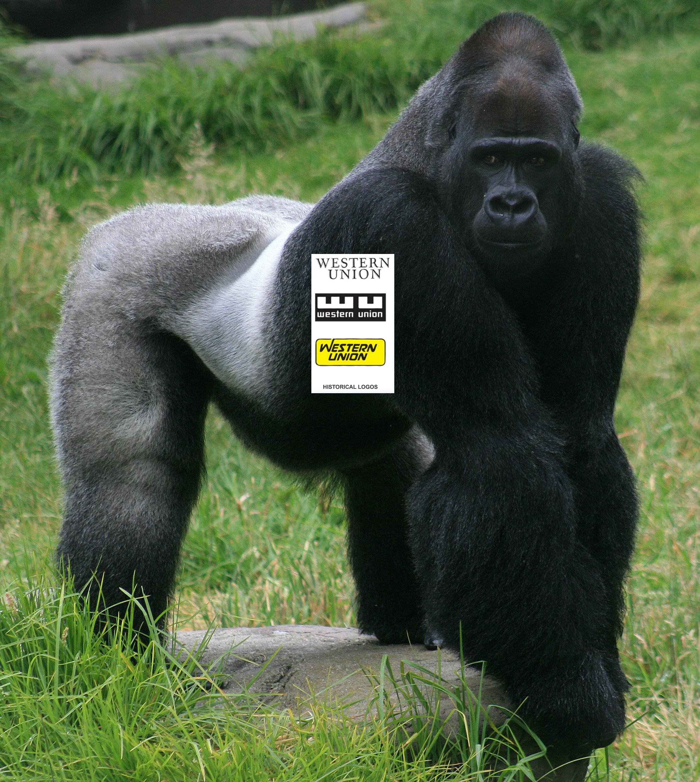 Western Union gorilla